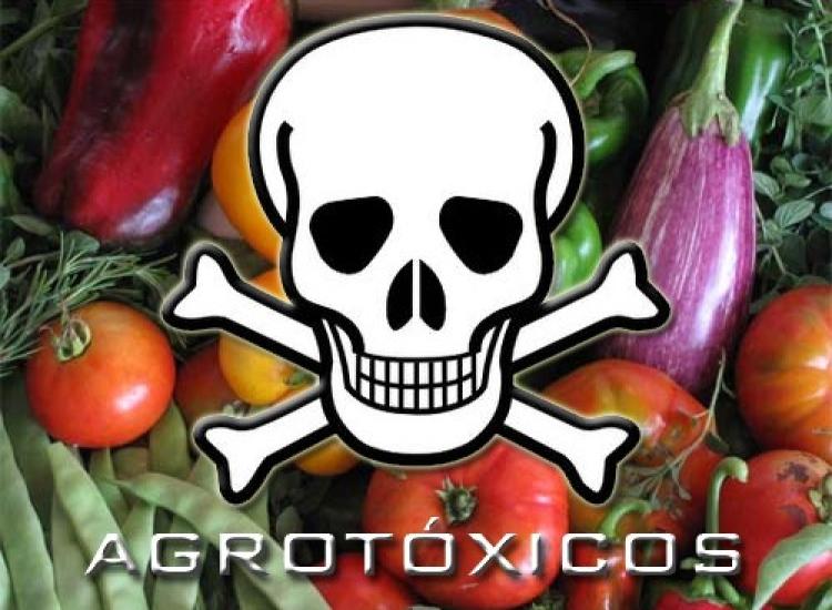 Confira dicas simples para diminuir ou eliminar os agrotóxicos nos alimentos